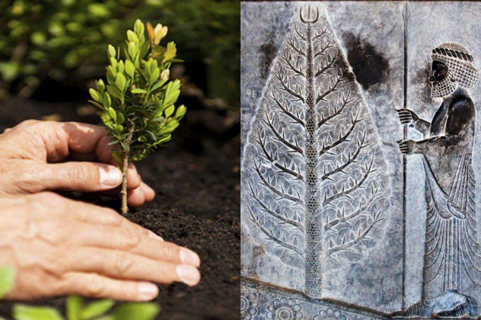 کاشتن درخت از دوران باستان